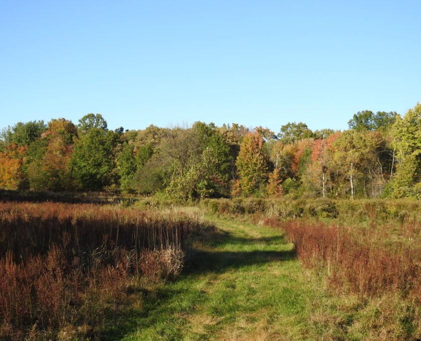 photo of field