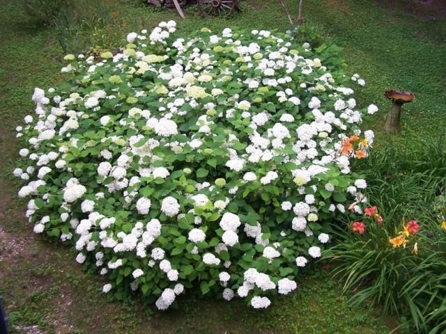 Focus Garden Plant 2