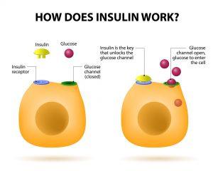 optimize insulin and prevent diabetes