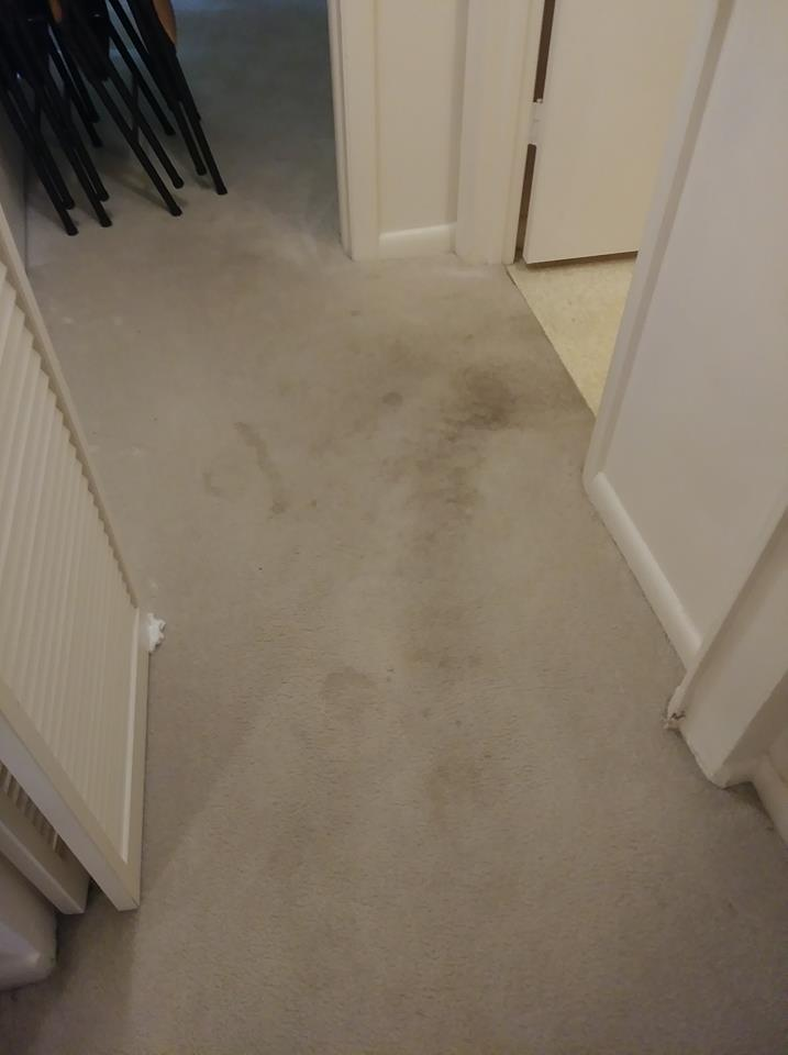 Ecogreen cleaning solutions/results