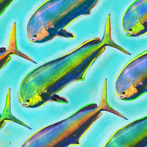 dolphin fish chesapeake bay