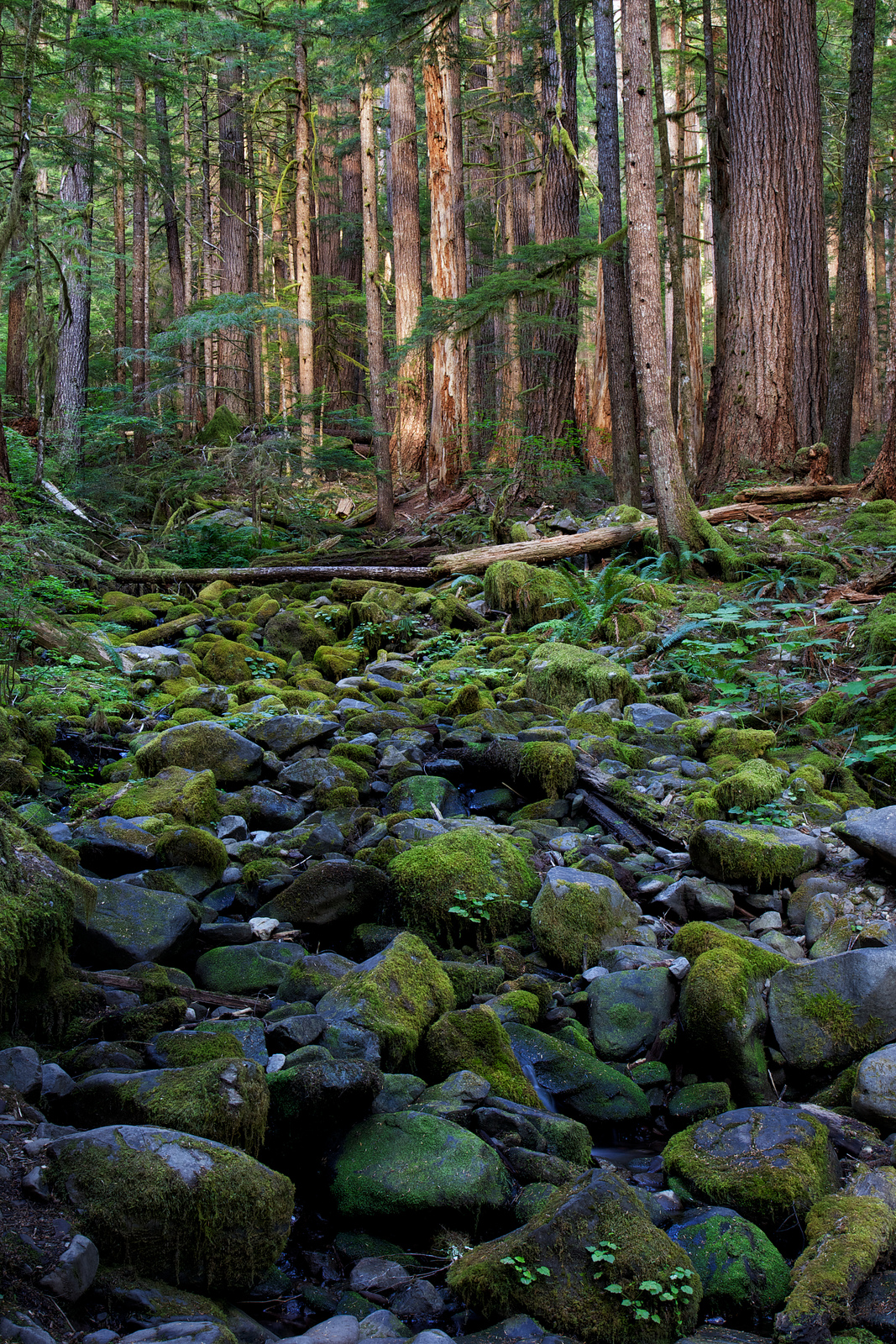 Creek Bed, Olympic National Park