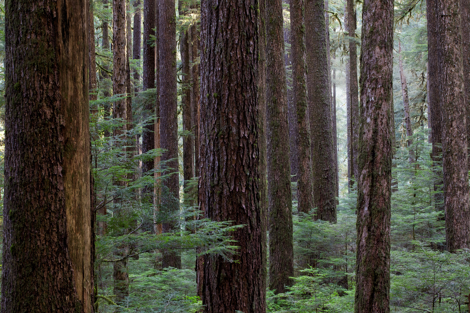 Forrest Olympic National Park