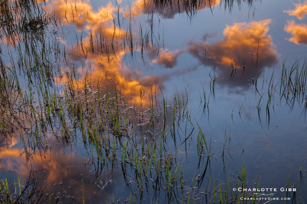 Tuolumne Meadows Reflected Sunrise