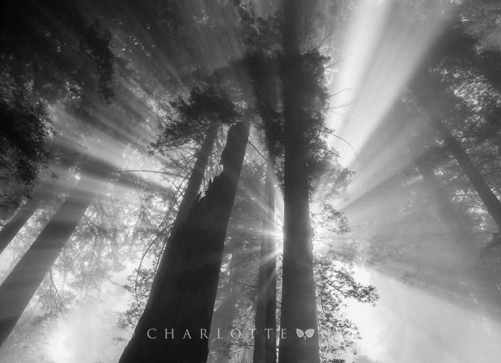 Godbeams, Redwood National Park, June 2014