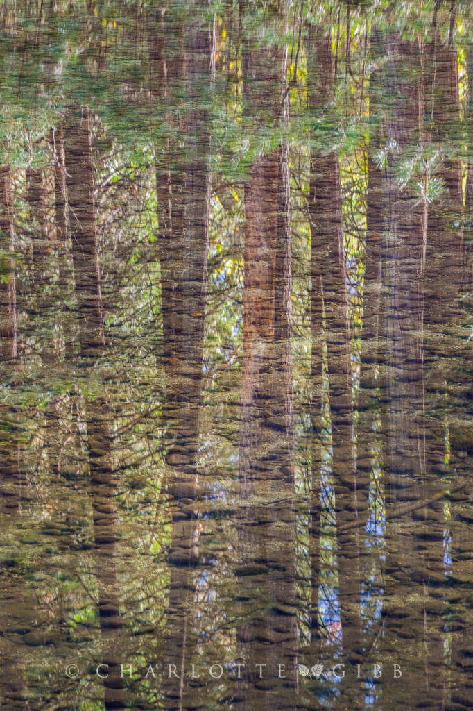 River Bottom and Reflected Pines, Yosemite Valley, October 2014