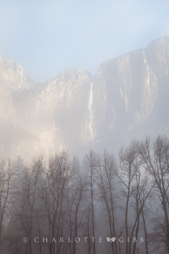 Upper Yosemite Fall and Trees in Mist, February, 2014