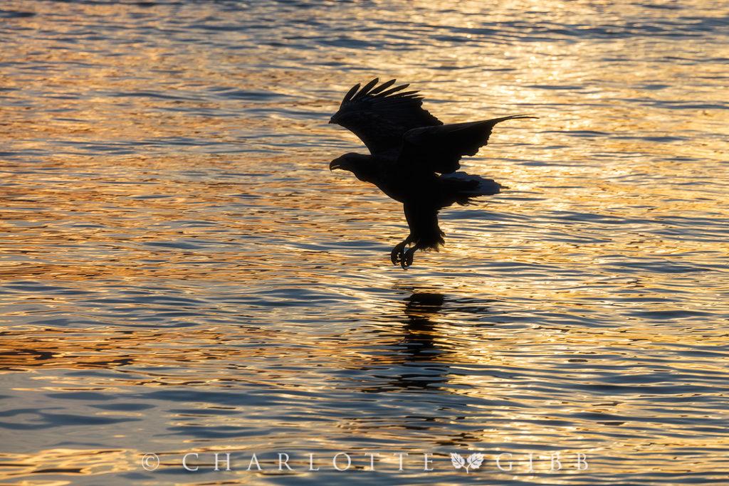 Sunrise-Breakfast-Hunt
