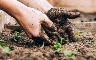 Time To Plant Your Colorado Garden   The Wise Team