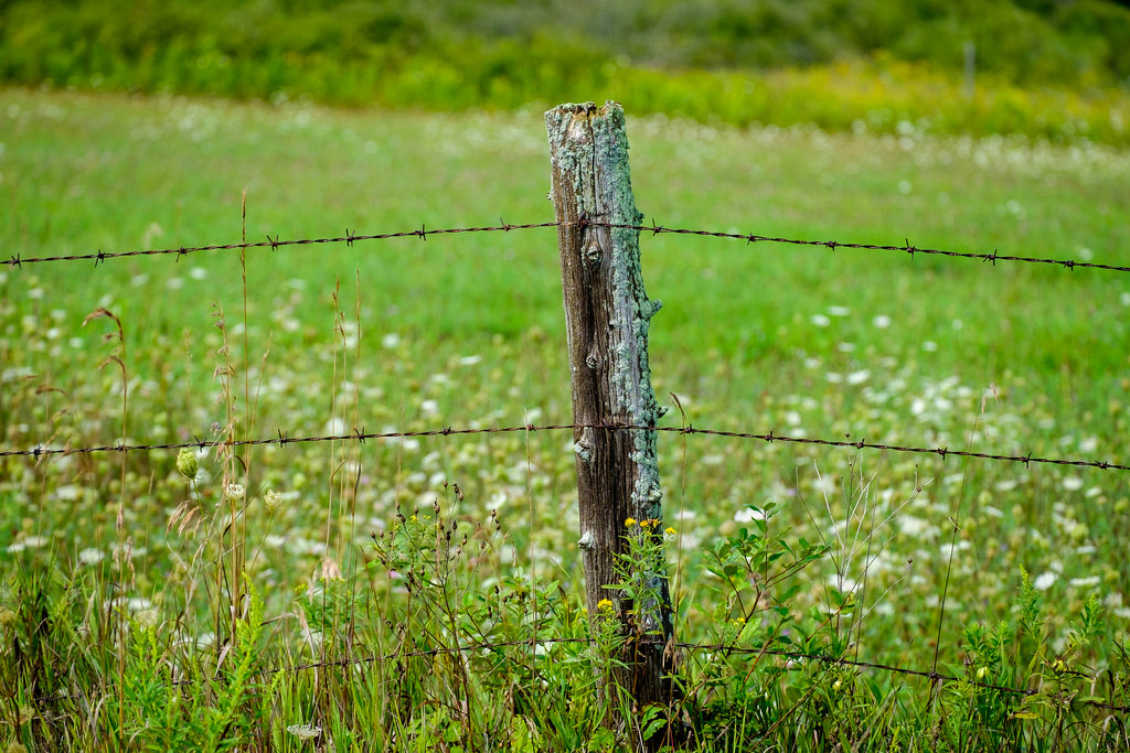 moss-covered-fence-post
