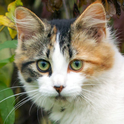 cat song ringtone download