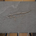 Warfield Fossils