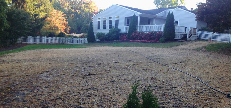 leveling and reseeding the lawn