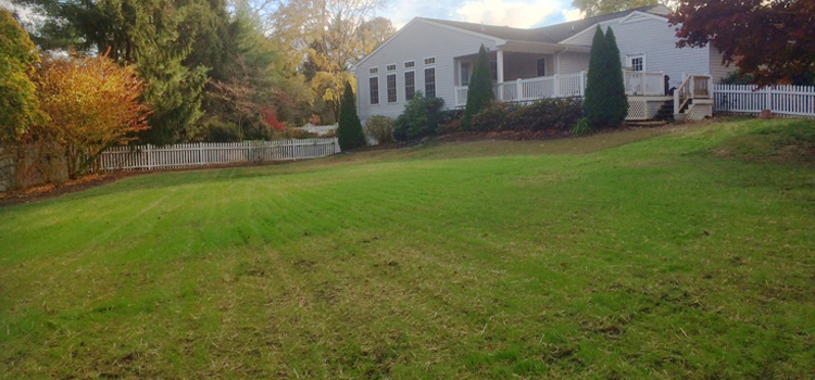 new lawn pool removed