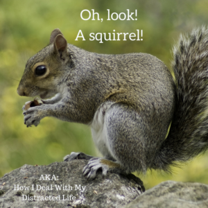 Grey squirrel eating nut with blog title text in white letters