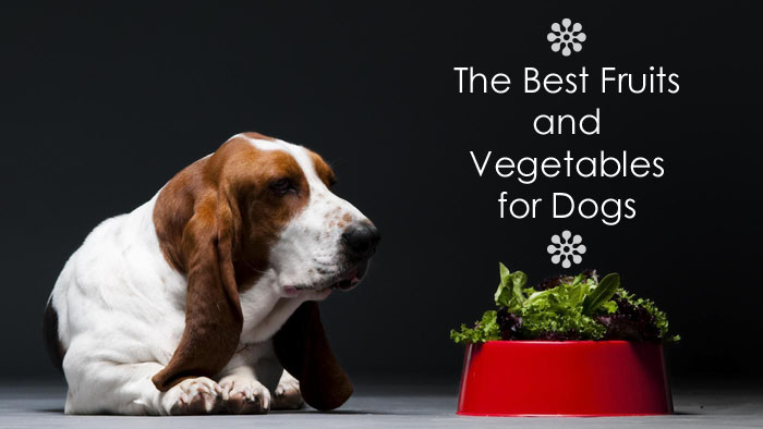 top fruits and vegetables for dogs