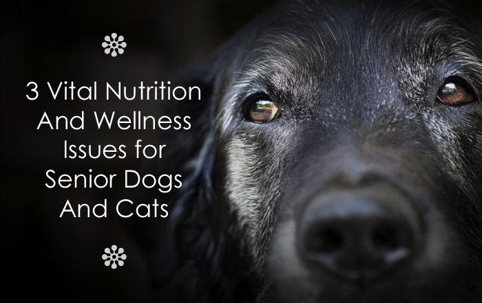 senior pet health issues