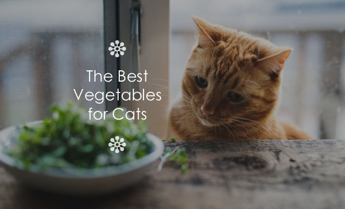 Best vegetables for cats