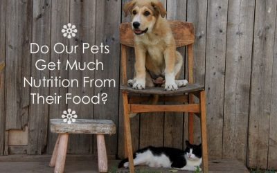 Do Our Pets Get Much Nutrition From Their Food?