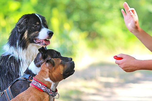 allentown dog trainer using clicker method
