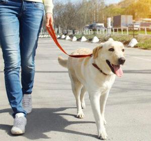 dog training to walk with leash