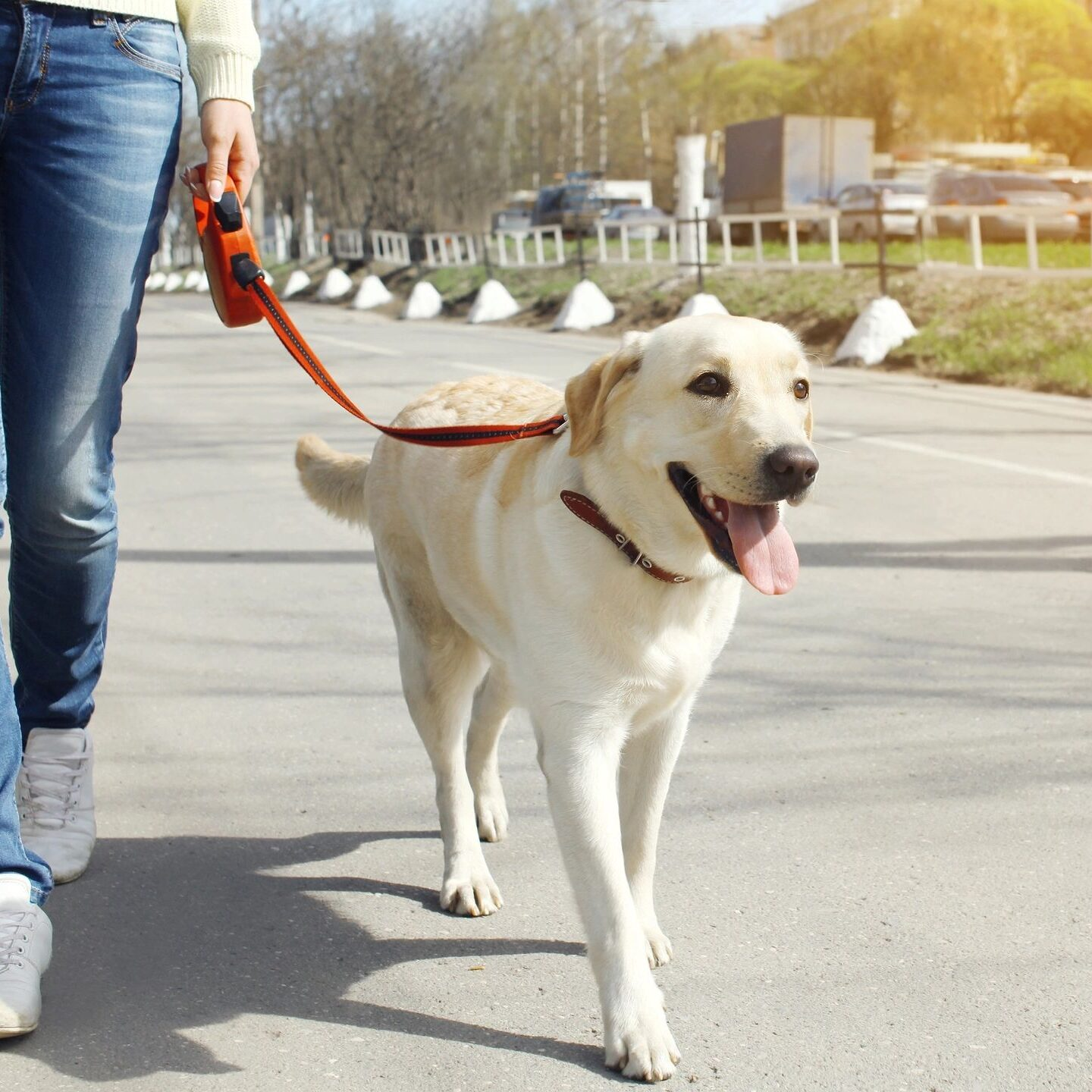 dog training to walk with a leash
