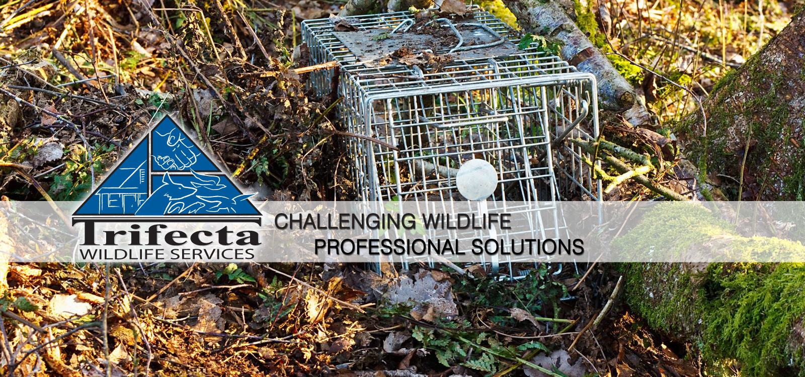 <div class='slider_caption'>		 <h1>Challenging Wildlife, Professional Solutions.  Call us today! (859) 415-4226</h1> 			<a class='slider-readmore' href=''>Read More</a>