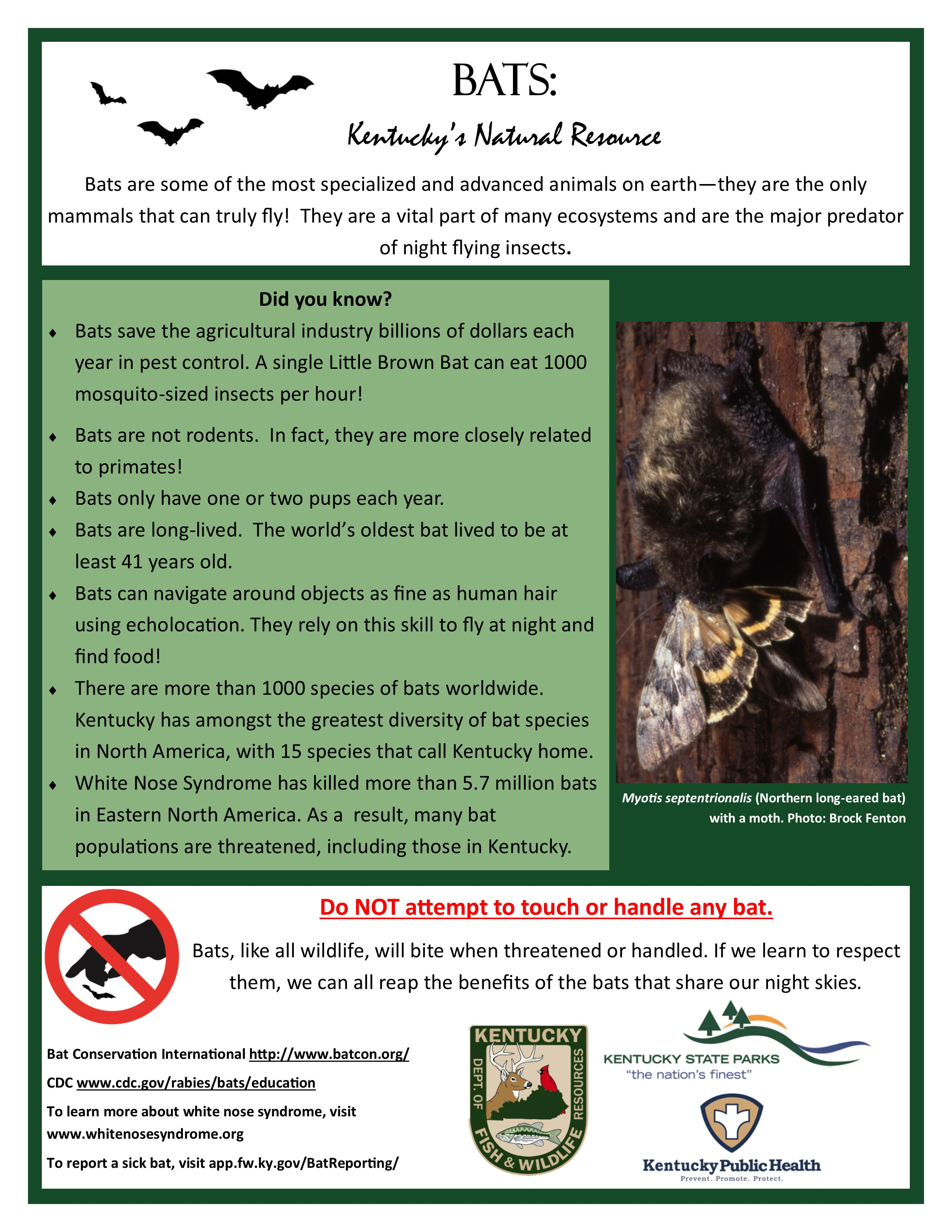 KY Bats poster providing bat facts and a message not to touch or handle any bat