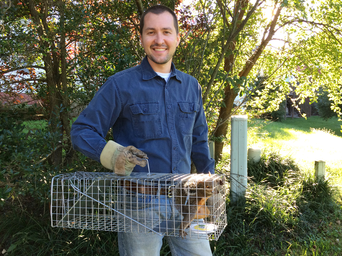 Live Squirrel Trapping in Lexington KY