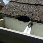 Squirrel entry into attic through roof corner