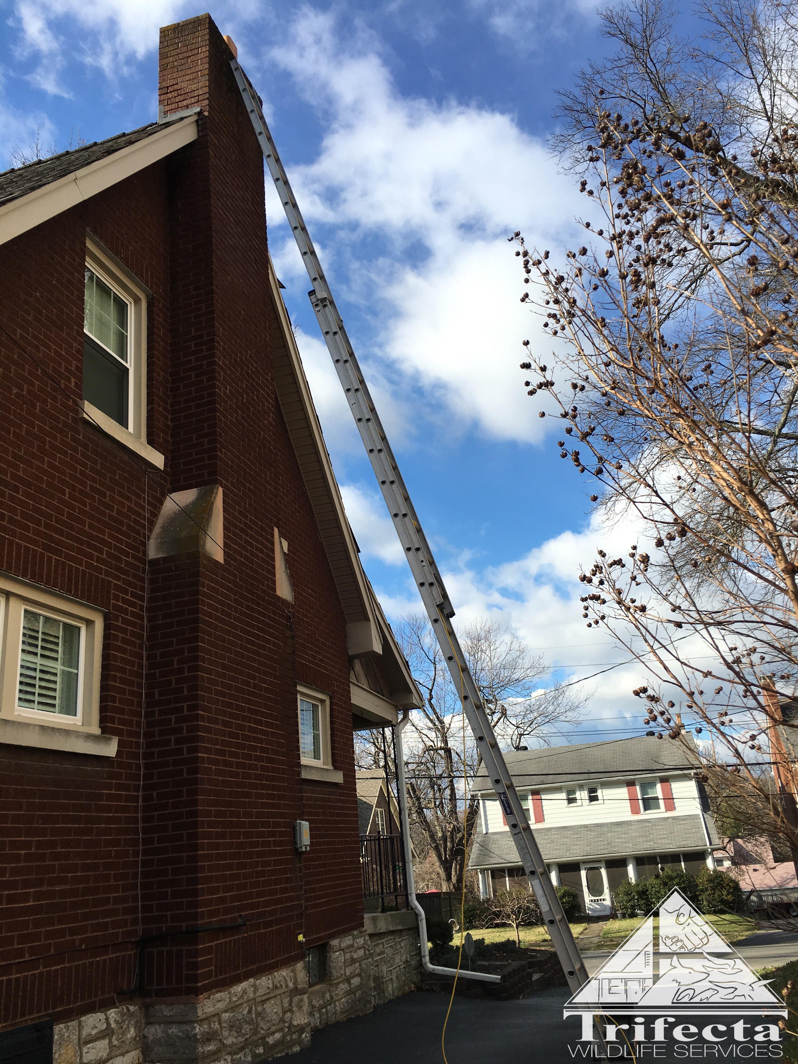 Lexington KY home where a raccoon had entered the chimney flue.