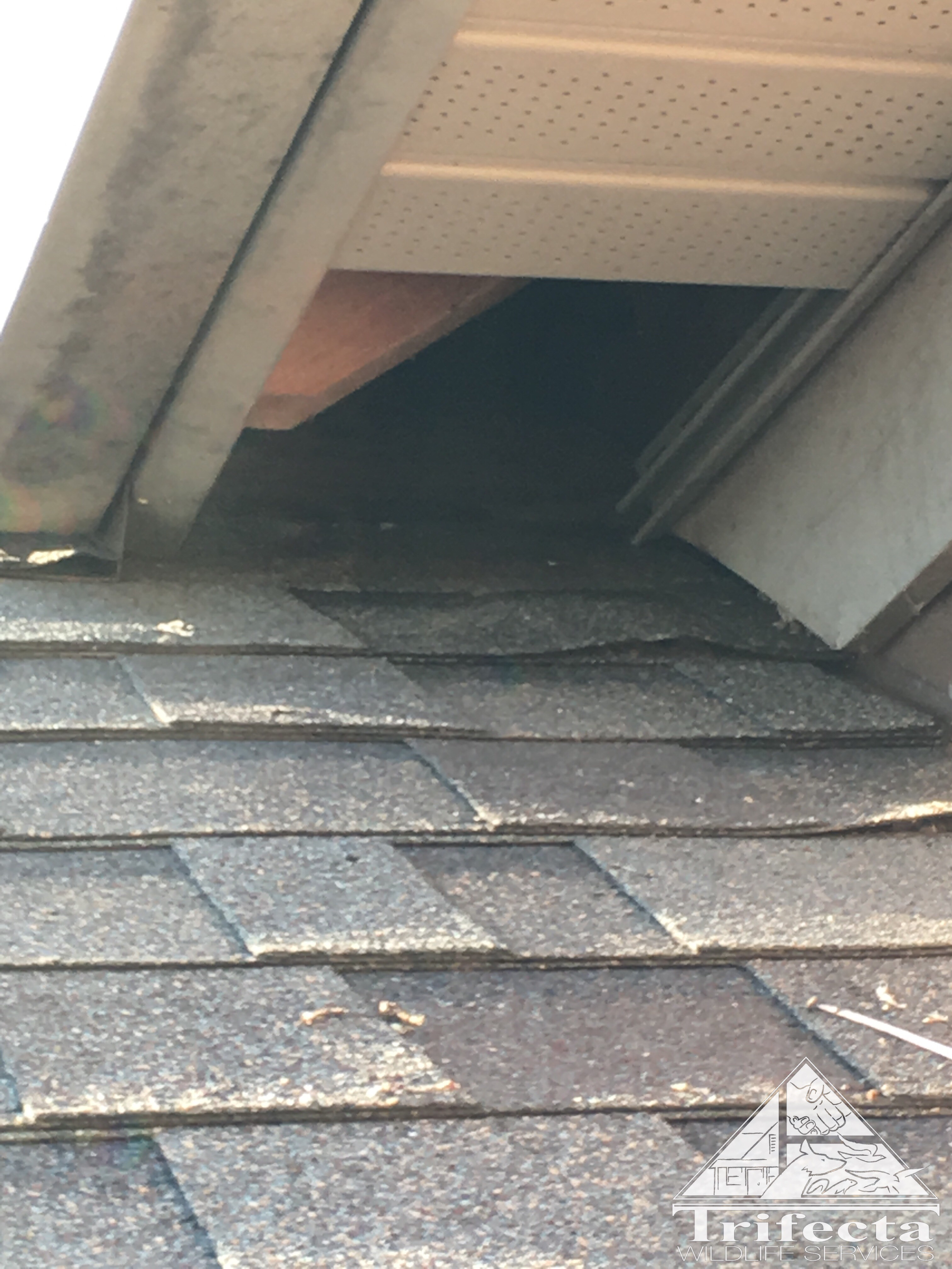 Soffit return entry being used by raccoon