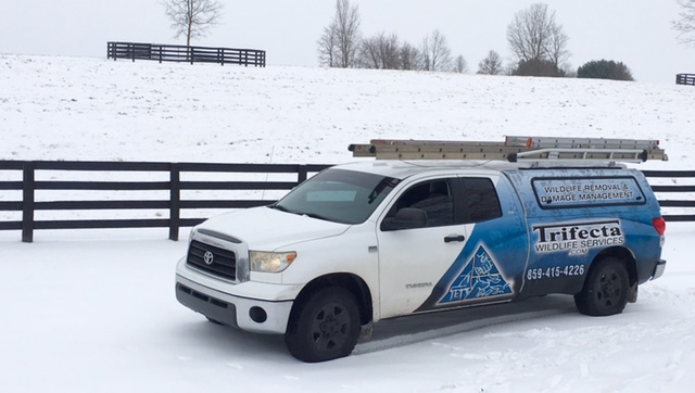 The Trifecta Wildlife Services truck during a central KY snow
