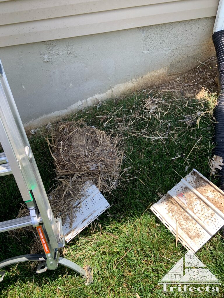 A view of the bird nesting debris that Team Trifecta removed from the soffit