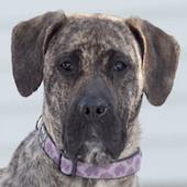 Meghan, a Pound Dog Rescue alumni dog.