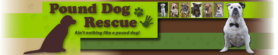 Pound Dog Rescue banner showing dogs we have rehomed.
