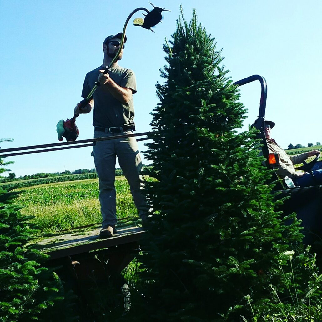 Photo Gallery Sickels Tree Farm
