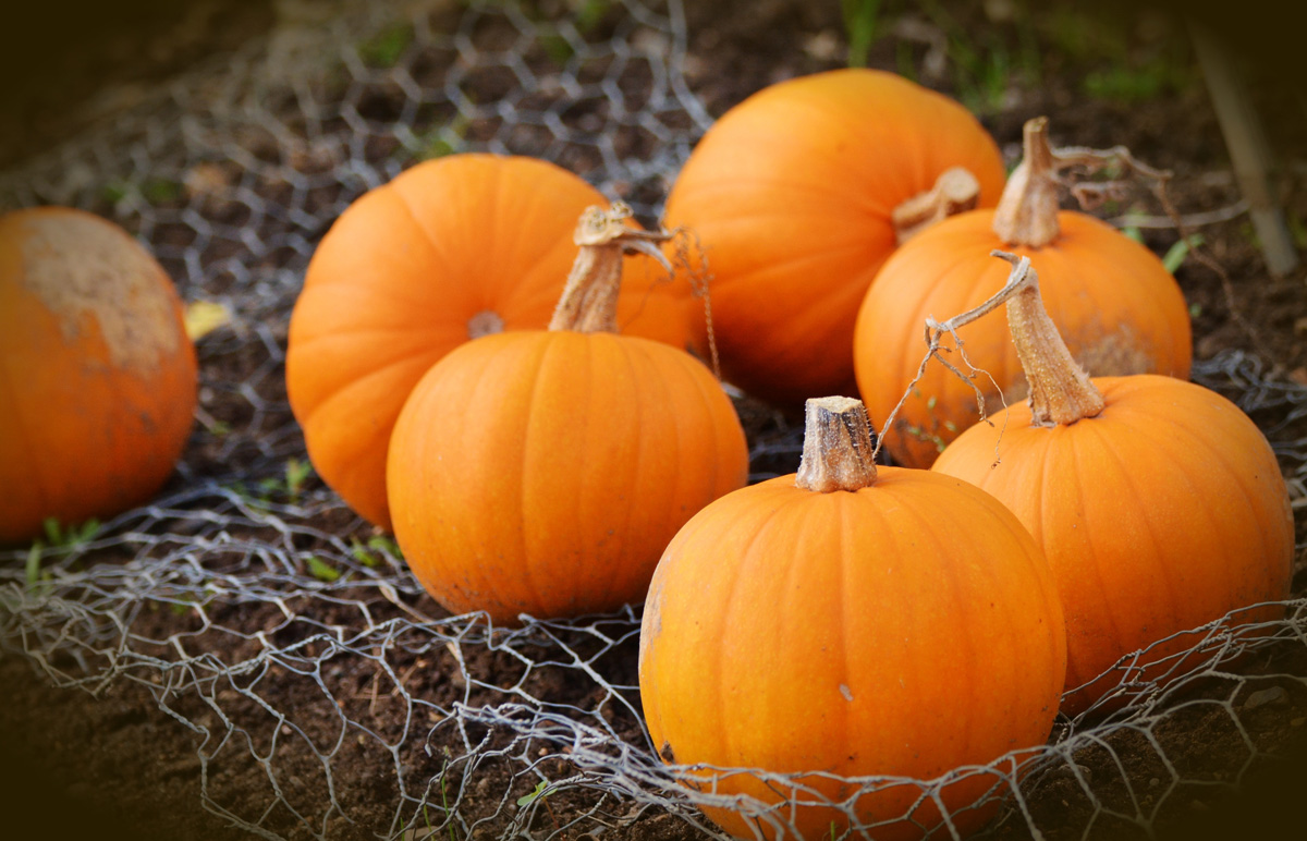 Pumpkins are Dental Health Superfoods