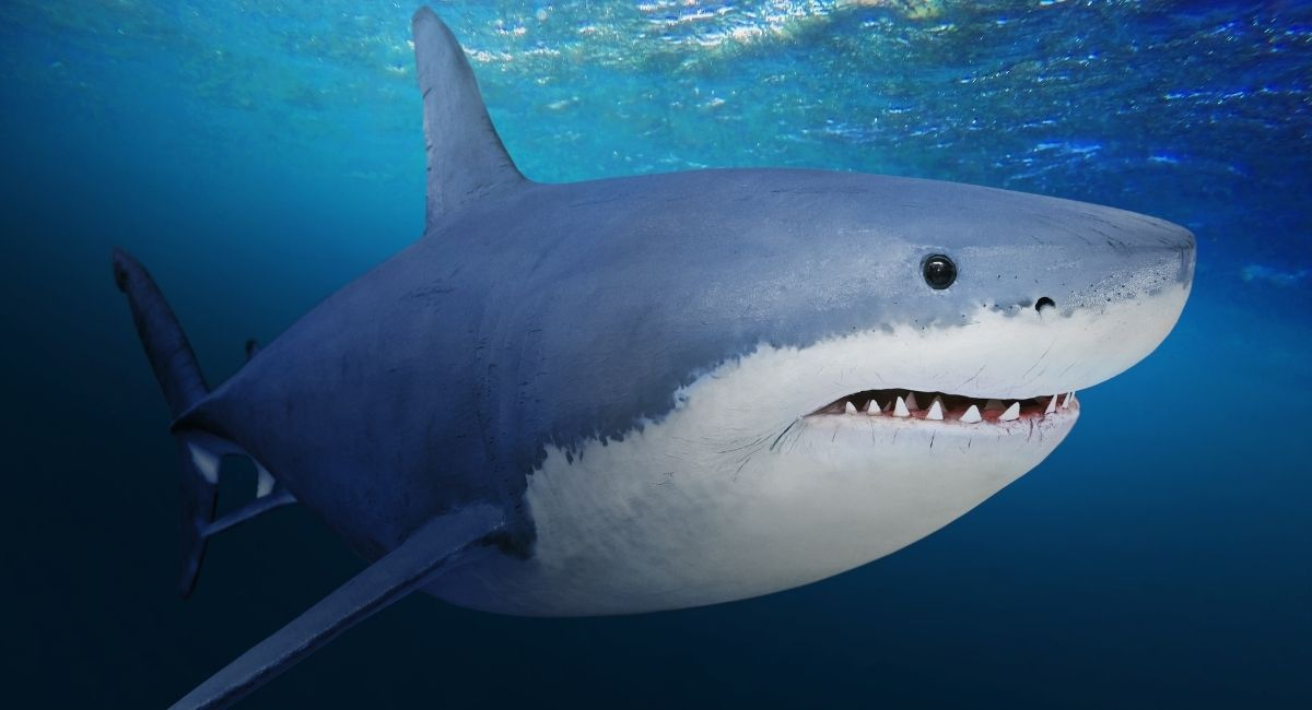What are Shark Teeth? Do You Need to Worry?