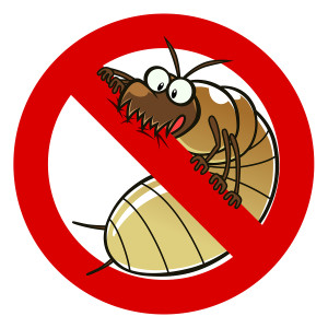 Never Worry About Termites Again