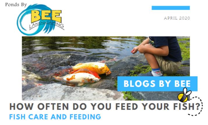 feedfishblog