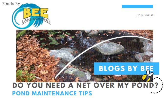 pond net blog