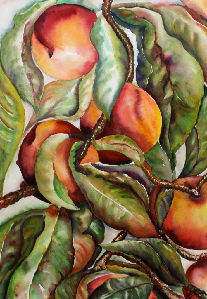 Peaches - A Summer Harvest - Belinda McGuire