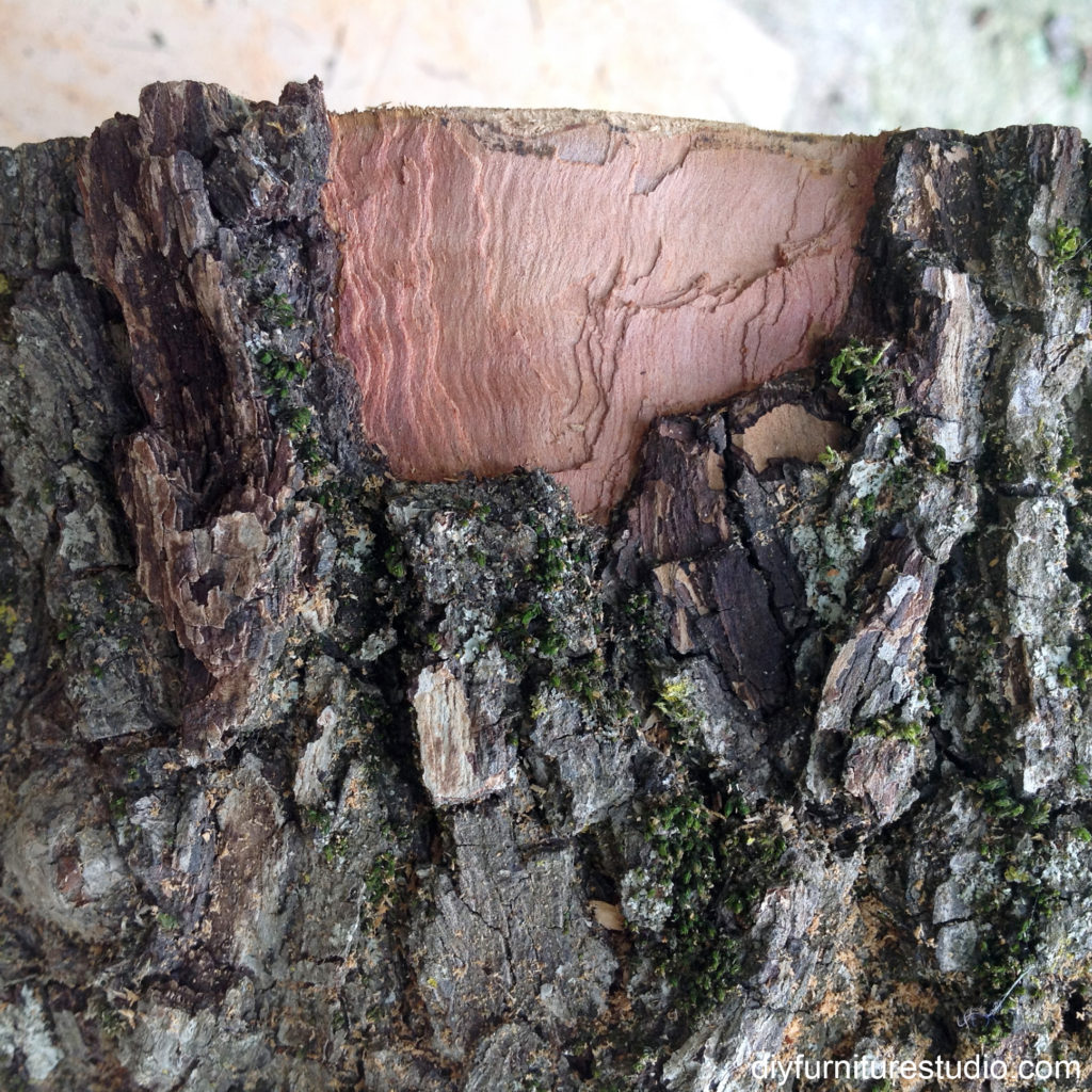 removing bark from tree stump slice for side table DIY project