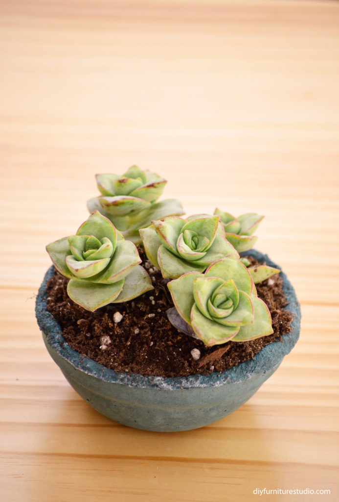 DIY cement succulent planter colored with BEHR teal latex paint