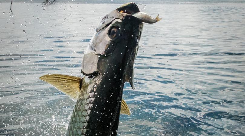 The History of Tarpon Fishing in Boca Grande