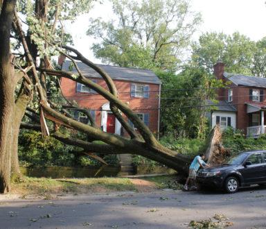 fallen tree in fron of a house