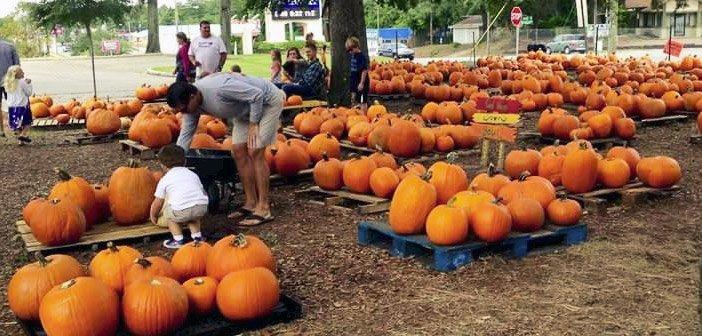 niceville pumpkin patch
