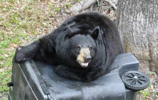 niceville florida black bear garbage