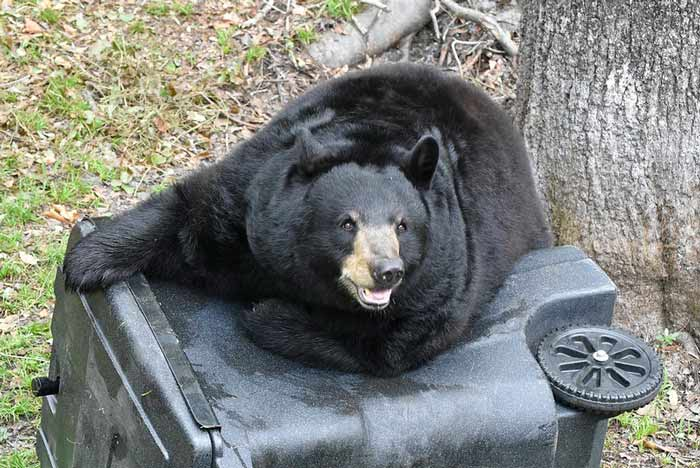 niceville florida black bear garbage